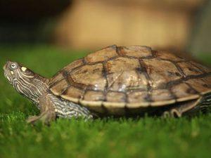 Awesome types of turtles in akumal bay #typesofturtles #turtlesforpets