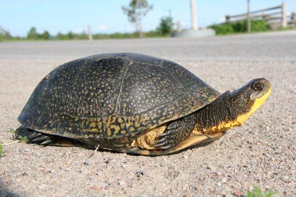 Cool types of turtles in oregon #typesofturtles #turtlesforpets