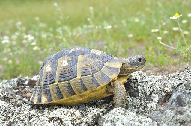 Wonderful types of turtles that live in the ocean #typesofturtles #turtlesforpets