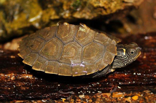 Beautiful types of turtles with orange spots #typesofturtles #turtlesforpets