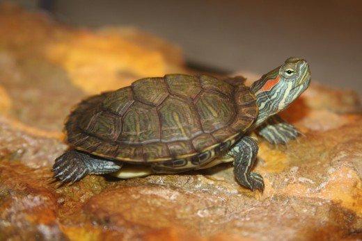 Amazing various types of turtles #typesofturtles #turtlesforpets