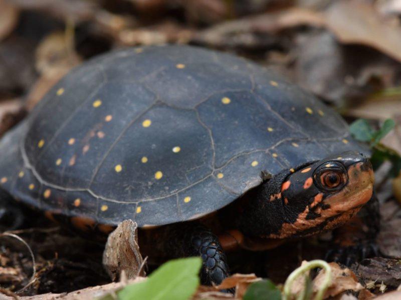 Amazing types of turtles in pakistan #typesofturtles #turtlesforpets
