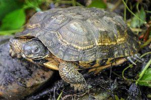 Good types of turtles in australia #typesofturtles #turtlesforpets